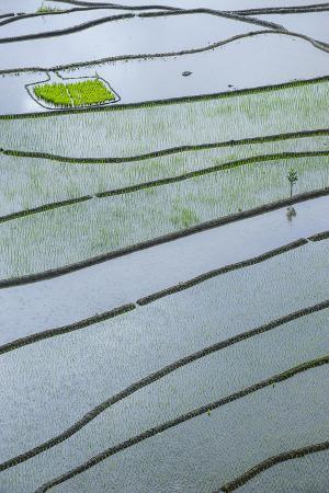 michael-runkel-rice-terraces-of-banaue-northern-luzon-philippines
