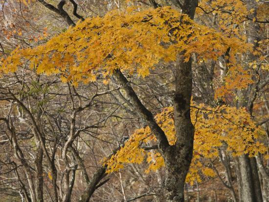 michael-s-yamashita-autumn-foliage-in-nikko-national-park