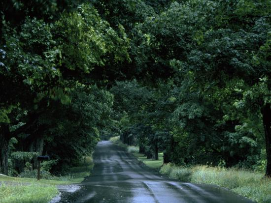 michael-s-yamashita-sugar-maples-shade-a-quite-country-road-on-the-gonyaw-farm-in-summer