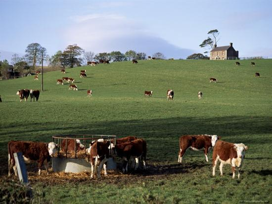 michael-short-cattle-south-of-bray-county-wicklow-leinster-eire-republic-of-ireland