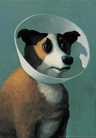 michael-sowa-dog-with-cone