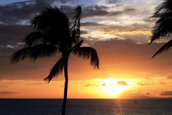 michael-szoenyi-palm-trees-on-a-beach-at-sunset