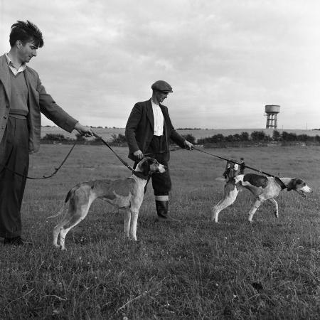 michael-walters-hound-trailing-one-of-cumbrias-oldest-and-most-popular-sports-keswick-2nd-july-1962