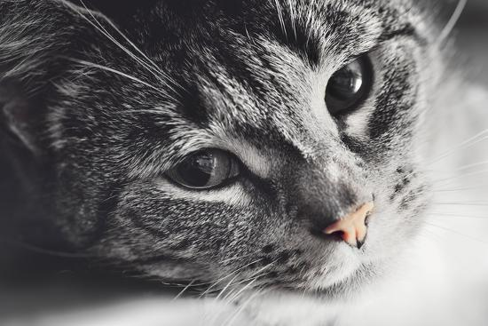 michal-bednarek-cute-cat-lying-in-lazy-sleepy-pose-looking-at-the-camera-with-its-magnetic-eyes-close-portrait-b