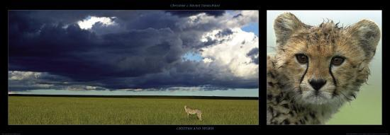 michel-christine-denis-huot-cheetah-and-storm