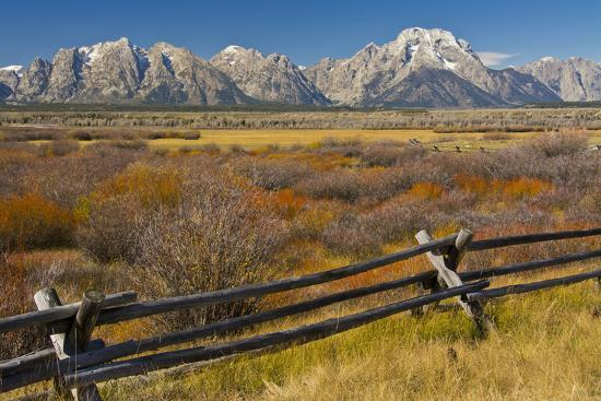 michel-hersen-fall-color-buck-and-rail-fence-grand-tetons-grand-teton-national-park-wyoming