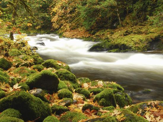 michel-hersen-sandy-river-in-autumn-welches-oregon-usa