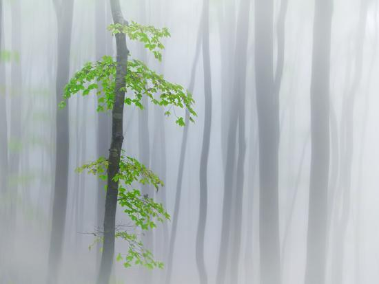 michel-manzoni-the-fog-and-leaves