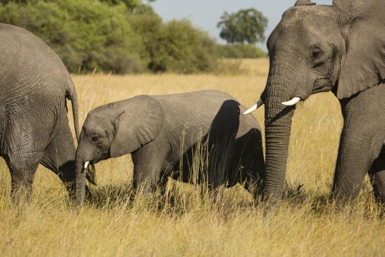 michele-westmorland-family-of-african-elephants