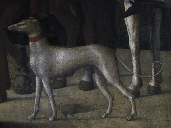michelle-da-verona-dog