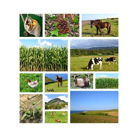 miff32-collage-of-rural-landscapes