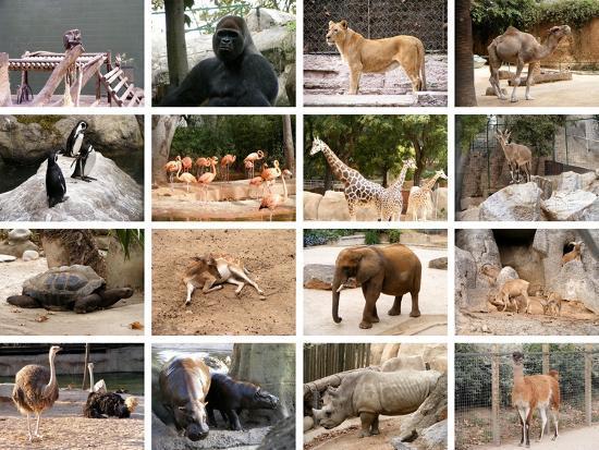 miff32-wild-animals-collage