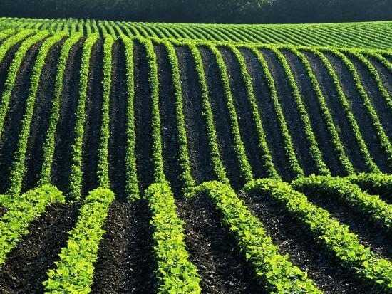 mike-grandmaison-bean-field