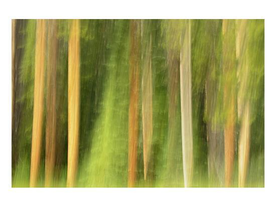mike-grandmaison-lodgepole-pine-abstraction