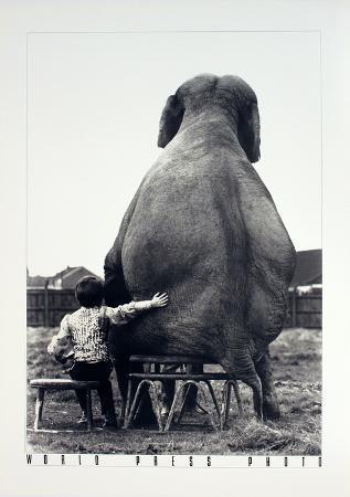 mike-hollist-my-pal-the-elephant
