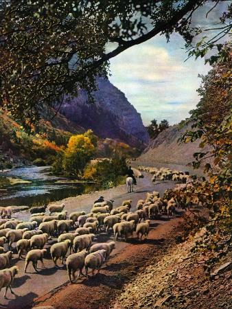 mike-roberts-herding-sheep-september-1-1943