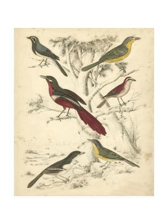 milne-avian-habitat-iv