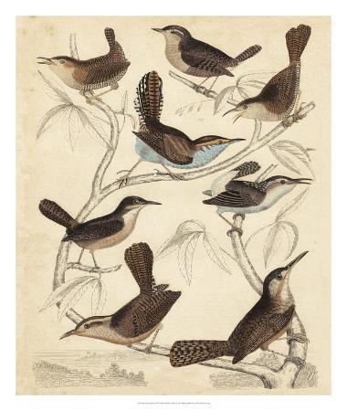 milne-avian-habitat-vi