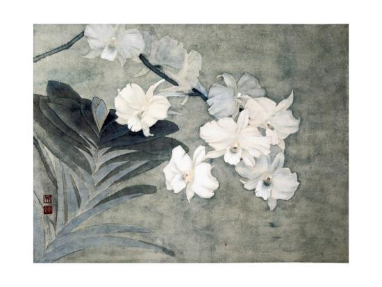 minrong-wu-attractive-orchids