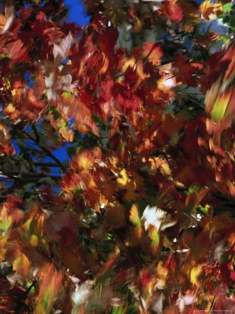 mitch-diamond-fall-colors-maple-leaves