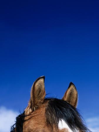 mitch-diamond-top-of-a-horse-s-head