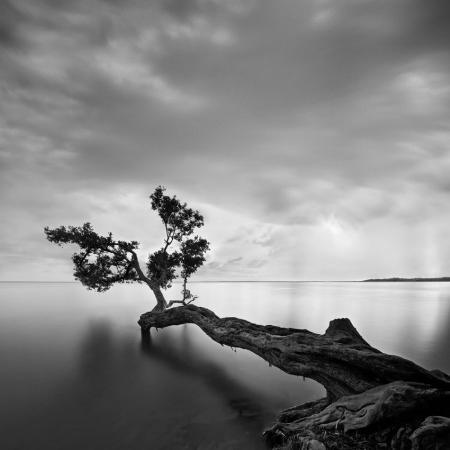 moises-levy-water-tree