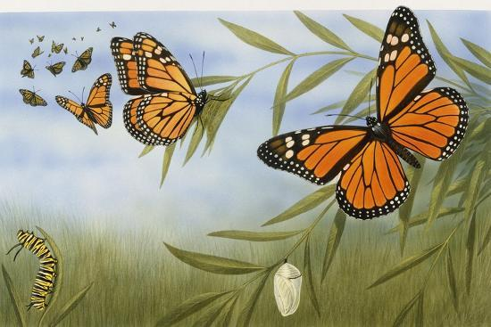 monarch-butterflies-danaus-plexippus-nymphalidae-with-larva-and-cocoon