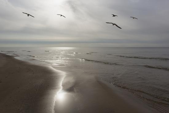 monte-nagler-five-birds-grand-haven-michigan-14-color