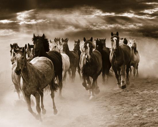monte-nagler-running-horses