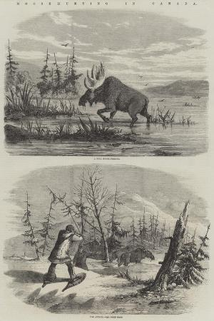 moose-hunting-in-canada