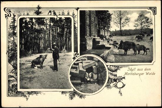 moritzburg-sachsen-idyll-auf-dem-wald-wildschweine-fuchs