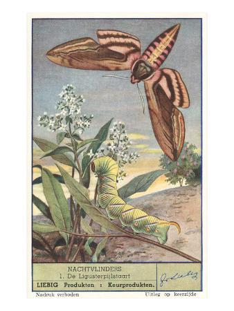 moth-and-caterpillar