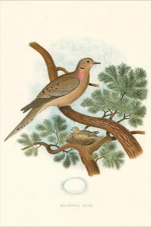 mourning-dove-nest-and-eggs