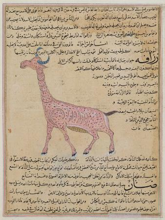 ms-e-7-fol-180-a-giraffe