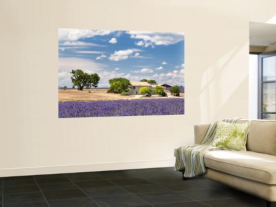 nadia-isakova-farmhouse-in-a-lavender-field-provence-france