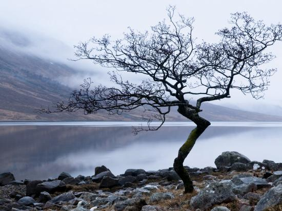 nadia-isakova-solitary-tree-on-the-shore-of-loch-etive-highlands-scotland-uk
