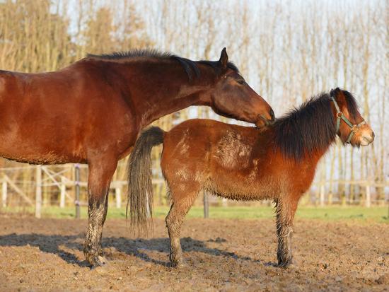 nadine-haase-rossiges-pony