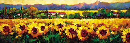 nancy-o-toole-sweeping-fields-of-sunflowers