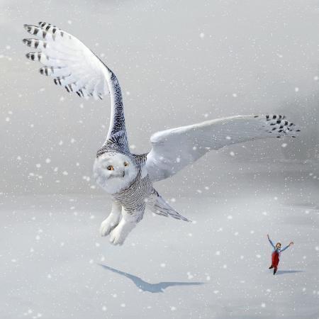 nancy-tillman-if-you-were-an-owl