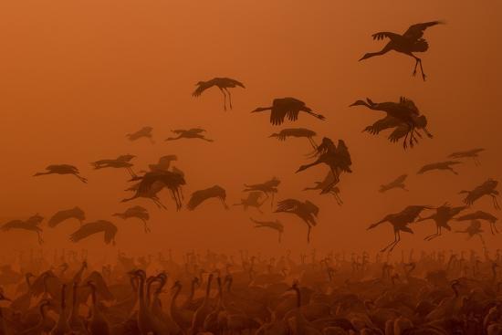 natalia-rublina-army-cranes-at-golden-sunrise