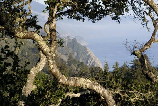 natalie-tepper-view-of-big-sur-coastline-central-california-usa-through-twisted-treetrunks