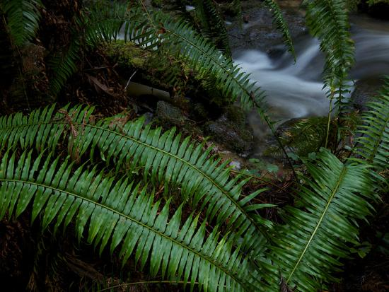 national-geographic-photographer-fern-fronds-at-the-edge-of-trillium-falls