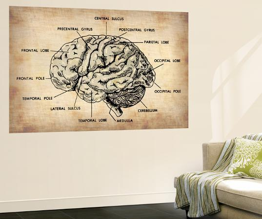 naxart-vintage-brain-map-anatomy