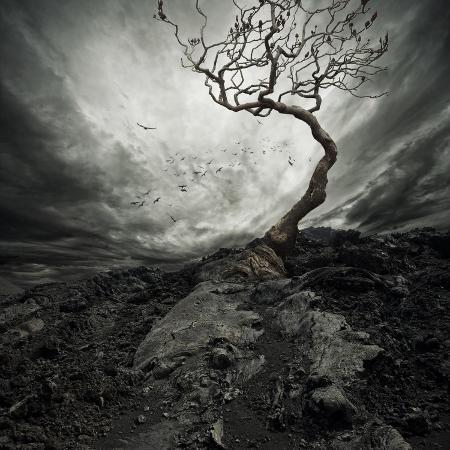 nejron-photo-dramatic-sky-over-old-lonely-tree