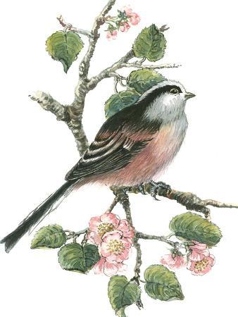 nell-hill-long-tailed-tit-and-cherry-blossom