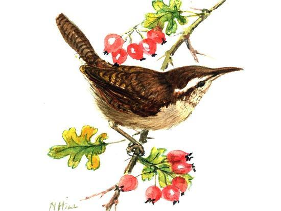 nell-hill-wren-and-rosehips