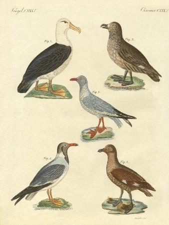 new-birds