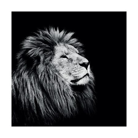 nicolas-evariste-majesty