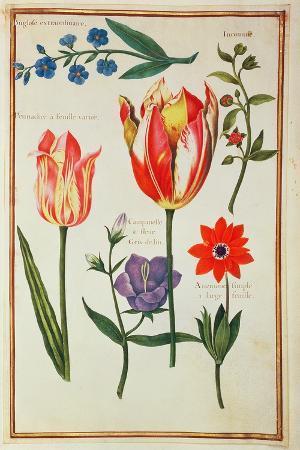 nicolas-robert-flower-studies