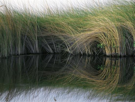nicole-duplaix-aquatic-grasses-blow-in-the-wind